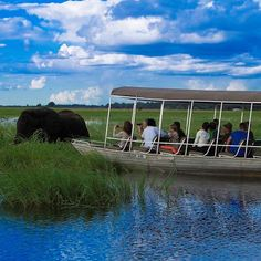 Explore Victoria Falls and Chobe on this adventure safari. Spend your time exploring Victoria Falls, the highlights, Chobe River & Chobe National Park. Chobe National Park, National Parks, White River Rafting, Tiger Fish, Herd Of Elephants, African Nations, Victoria Falls, Bungee Jumping, Small Towns