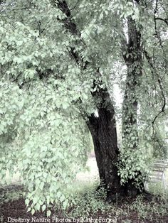 """Nature Photos - Dreamy Mint Green Tree, Cottage Chic, Shabby Chic Pastel Nature Photos, Surreal Trees, Ethereal Fine Art Photo 9"""" x 12"""". $28.00, via Etsy."""