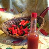 Homemade Tabasco Sauce Hot Pepper Sauce - Easy to make from garden Chili Peppers