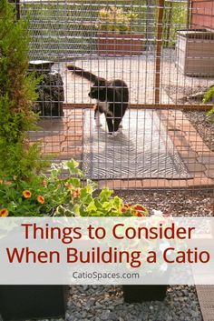 Consider things like your cat's personality, age, and preferences when designing your catio
