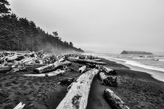 Rialto Beach Black and White A black and white shot of driftwood on Rialto Beach on the West Coast of Washington State.