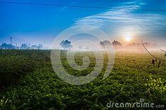 Sunrise over baat mustard field