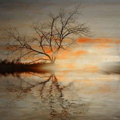 Trees, water, mist and the bleeding sun combine to adorn…