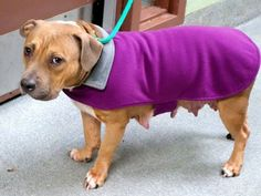 SAFE --- Manhattan Center   SYRA - A1019259   FEMALE, TAN / WHITE, PIT BULL, 3 yrs STRAY - STRAY WAIT, NO HOLD Reason STRAY  Intake condition UNSPECIFIE Intake Date 10/31/2014   Main thread: https://www.facebook.com/photo.php?fbid=904708586208688