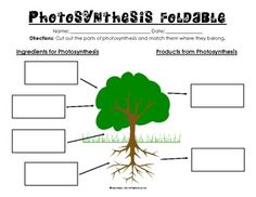 Remembering all of the components of photosynthesis can be overwhelming! This activity is a foldable that breaks up the monotony of just paper pencil practice.  For this foldable, students will have to: -first identify the ingredients and products of photosynthesis -then match the description of each ingredient or product underneath the flap  Use as in class practice, homework, or an assessment. An answer key is included.  This activity directly supports Virginia Science SOL 4.4.