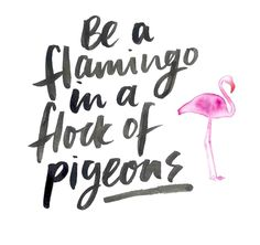 Be a flamingo in a flock full of pigeons