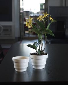 Maceta Mitu Vértigo - Mitu Vertigo pot  Medidas - Size ø 12 (cm. 12 x 9 h.) lt. 06 ø 16 (cm. 16 x 12 h.) lt. 15 ø 20 (cm. 20 x 15 h.) lt. 3  #decoracion#decor#home #homeandgarden#florist#floristeria #instadecor#pottery#casa#casayjardin #pot#decoration#deco#decoração#jardin#macetas #housedecor#florista#plantas#plants #plant#floreria#plantbox #jardinera#jardineria #cachepot #homedesign #gardencenter #garden #vivero