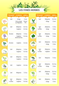 Herbs cultivate them preserve them savor them Arctic gardens Herb Garden, Vegetable Garden, Health Options, Herbs Indoors, Organic Living, Organic Makeup, Natural Supplements, Plantation, Permaculture