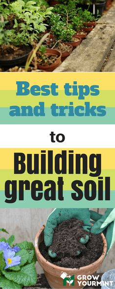 Gardening For Beginners In this article, I will give you some excellent tips for building soil, so that you can do some research on your own, and see which approach fits your needs. Wildflower Garden, Amazing Gardens, Organic Gardening, Garden Soil, Plants, Vegetable Garden Planning, Lawn And Garden, Gardening Tips, Organic Pesticide