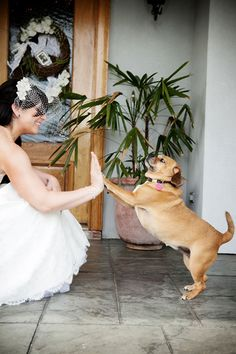 Do you want to include pets in your wedding day? Here you find wonderful and creative photo ideas with wedding pets! Photography Ideas At Home, Wedding Photography Poses, Wedding Poses, Wedding Ideas, Wedding Hacks, Photography Services, Wedding Reception, Wedding Dresses, Wedding With Kids