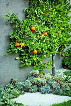 30 Incredible Low-Water Landscaping Ideas for Your Garden - Page 13 of 31 Low Water Landscaping, Succulent Landscaping, Succulents Garden, Garden Plants, Garden Landscaping, Landscaping Ideas, Arizona Landscaping, Inexpensive Landscaping, Bamboo Garden