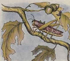 Aesop's Fables - The Owl And The Grasshopper By Milo Winter