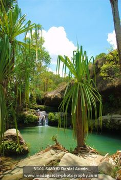 Natural swimming pool oasis, Isalo National Park, Madagascar | David Austin, Madagascar Photography