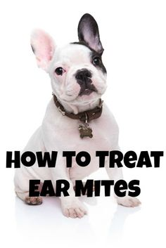 How to Treat Itchy, Nasty Ear Mites in Dogs