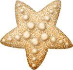 lliella_starfish2.png