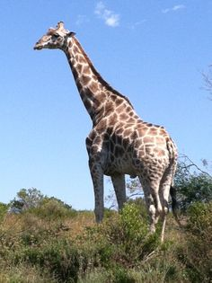 The Gap Year Blog - Volunteer Journals - Margaret Doheny, South Africa Field Guide Course Week2. Learn more about opportunities to volunteer and gap year travel at www.frontier.ac.uk