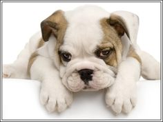 4 Dog Puppy Bulldog Greeting Notecards/ Envelopes Set. $6.99, via Etsy.
