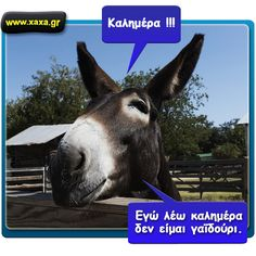 Γαϊδούρι Greek Quotes, Wise Quotes, Funny Quotes, Wise Words, Good Morning, Haha, Character Design, Animals, Smile