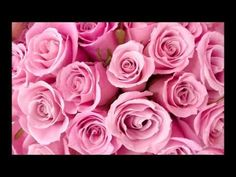 red roses most popular rose rose wallpapers beautiful rose red Beautiful Pink Roses, White Roses, Pretty In Pink, Pink Flowers, Beautiful Flowers, Pretty Roses, Fresh Flowers, Flowers Today, Birth Flowers