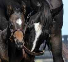 Zenyatta with her first foal :: a colt, born March 8, 2012