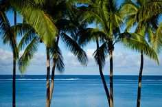 Palms trees on the #beach. #Fiji #Travel #Holiday #Ocean