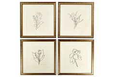In love with these ink line drawings of flowers framed in antique brass