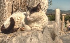 One of the famous cats residing at the ancient city ruins of Ephesus
