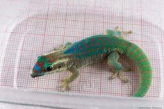 Les geckos, qui ont connu des plaisirs charnels dans l'espace, sont morts… mais les mouches ont survécu