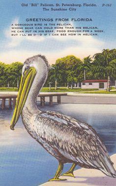 PELICAN St PETERSBURG FLORIDA Vintage Linen by AgnesOfBohemia, $3.99