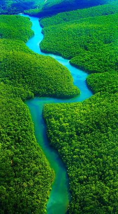 The mighty Amazon River flowing through the world's largest (but threatened) rainforest