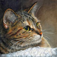 "COLORED PENCIL Magazine - Contests & Giveaways!: February CPM Art Challenge ""Portrait of a Cat"" #1402"