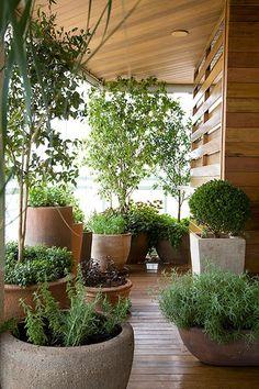 Os vasos de arenito carregam ervas e temperos de diferentes alturas. São eles…