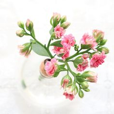 "Flowers Peet | Petra Jansen on Instagram: ""De kalanchoe bloemetjes waren er weer. Gelijk gekocht en een mooi plekje gegeven 🌸 The kalanchoe flowers were there again. Equally bought…"" Instagram Accounts, Glass Vase, Flowers, Royal Icing Flowers, Flower, Florals, Floral, Blossoms"