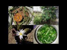 Medicinal Rice P5N Formulations for Asparagus Excess: Pankaj Oudhia's Me...