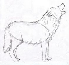 Wolf Drawing Step by Step - Samantha Bell