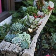 O Primavera Garden preparou uma galeria de imagens de cactus e suculentas para inspirar você a utilizar essas lindas e resistentes plantas na decoração de ambientes. #cactus #suculentas #decoracao #jardinagem #paisagismo #garden