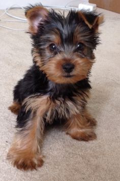 Omg this puppy is so adorable!