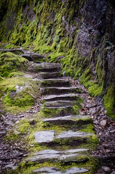 Stone Steps Glengarriff Nature Reserve
