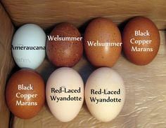 beautiful eggs & the breeds that lay them ~