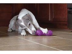 Purchase a Busy Buddy® Squeak 'n Treat Ooga by PetSafe this December, and a PetSafe toy will be donated to an animal shelter.