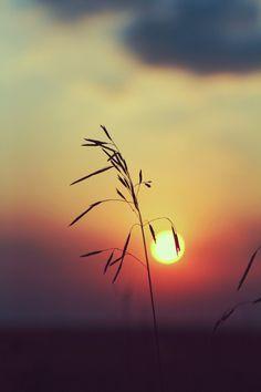 sundxwn:   Fragile sunset by Yana Gourenko