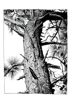 Jamie Hewlett - tree trunk
