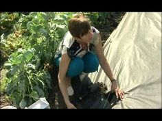 O pěstování malin www.telereceptar.cz - YouTube