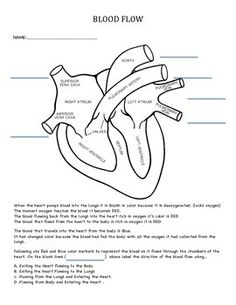 circulatory system lesson plans worksheets printables science lesson plans worksheets. Black Bedroom Furniture Sets. Home Design Ideas