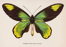 victorian style butterfly illustration - Google Search