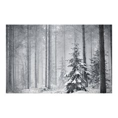 60 Cool Examples of Winter Photography ❤ liked on Polyvore