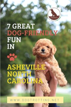 7 Great Dog-friendly Activities in Asheville, North Carolina
