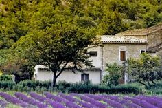 Aix en Provence, France--it only cost €19 to book a plane ticket here from Belgium. going in one week when my mom & stepdad get here!
