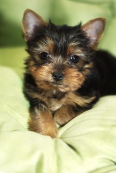 Sweetness.... I want one so much! Just waiting for God to make that Happen!! ...christy<3