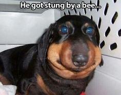 Poor dog.  lol
